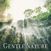 Gentle Nature – Soft Music for Relaxation, Restful Sleep, Calm Down, Pure Therapy, Tranquility by White Noise Meditation (1)