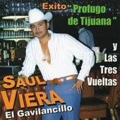 Profugo de Tijuana y Las Tres Vueltas by Saul Viera