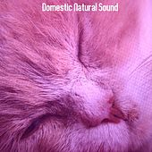 Domestic Natural Sound by Baby Sleep Sleep