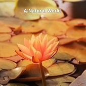 A Natural World by Sounds of Nature Relaxation