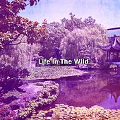 Life In The Wild by Massage Therapy Music
