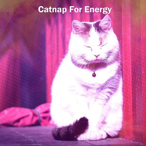 Catnap For Energy by Einstein Baby Lullaby Academy