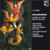 J.S. Bach: Adventskantaten by Various Artists