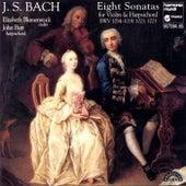Bach: 8 Violin Sonatas BWV 1014-1019, 1021, 1023 by Various Artists