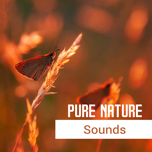 Pure Nature Sounds – Calming Songs for Relax, Stress Relief, Reduce Anxiety, New Age for Healing Nerves de Reiki