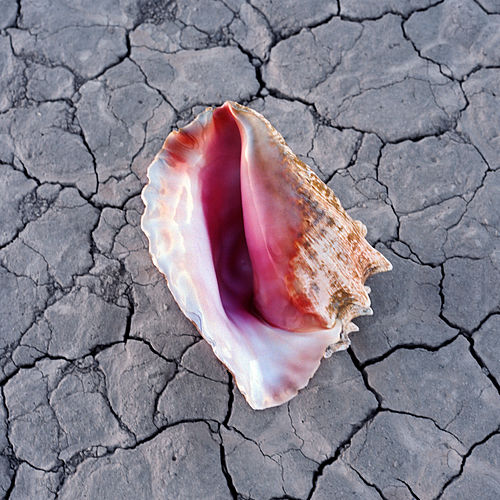 Wonderful Wonderful (Deluxe) by The Killers