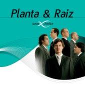 Planta & Raiz Sem Limite de Planta E Raiz