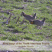 Bird Songs of the North American Prairie by John Neville