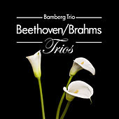Play & Download Beethoven/Brahms: Trios by Bamberg Trio | Napster