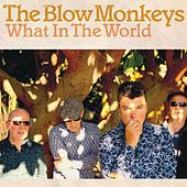 What In The World by The Blow Monkeys