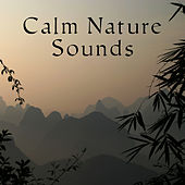 Calm Nature Sounds – Easy Listening, Peaceful Nature, Soothing Sounds, New Age Waves, Stress Free by Sounds Of Nature