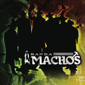Play & Download Arremángala Arrempújela by Banda Machos | Napster