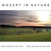 Mozart in Nature by Jordi Morató