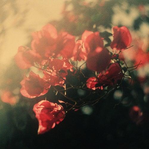 Hearts by Blackbird Blackbird