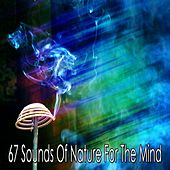 67 Sounds Of Nature For The Mind by Massage Therapy Music