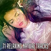 71 Relaxing Nature Tracks by Deep Sleep Relaxation