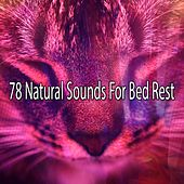 78 Natural Sounds For Bed Rest by Sounds Of Nature