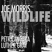 Wildlife by Joe Morris
