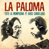 La Paloma by Toto La Momposina