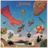 Splendor by The Splendor