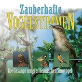 Zauberhafte Vogelstimmen: Bird Voices by Vogelstimmen