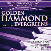 Golden Hammond Evergreens by Lesley Lay