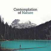 Contemplation of Nature – Healing Music to Rest, Soothing Nature Sounds, Deep Sleep, Relaxing Waves, Singing Birds by Sounds of Nature Relaxation