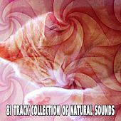 81 Track Collection Of Natural Sounds by Ocean Sounds Collection (1)