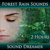 Forest Rain Sounds (2 Hours) by Sound Dreamer