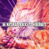 66 Natural Tracks To Hibernate by Ocean Waves For Sleep (1)