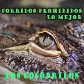 Corridos Prohibidos, Lo Mejor: Los Cocodrilos by Various Artists