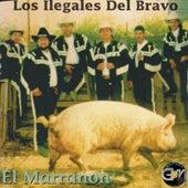 El Marranon by Los Ilegales del Bravo