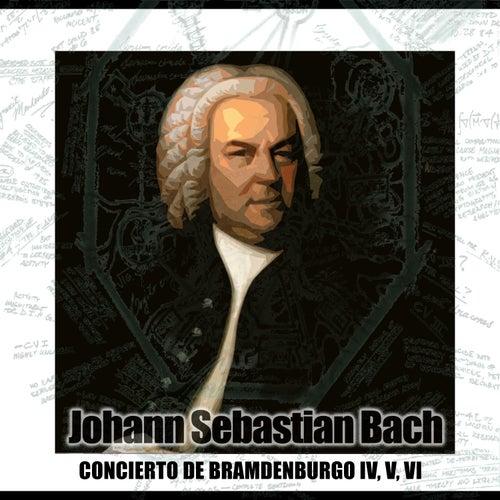 Conciertos De Brandenburgo IV, V, VI by Petrus Schneider