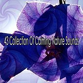 43 Collection Of Calming Nature Sounds by Ocean Sounds Collection (1)