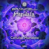 Cellular Mandala by Mandala