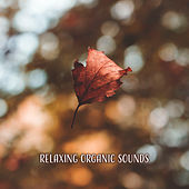 Relaxing Organic Sounds by Nature Sound Series
