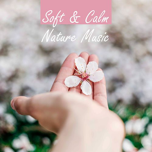 Soft & Calm Nature Music – Relaxing Melodies to Calm Down, Peaceful Music, Sounds to Relax, Best Background New Age by Relaxing Sounds of Nature
