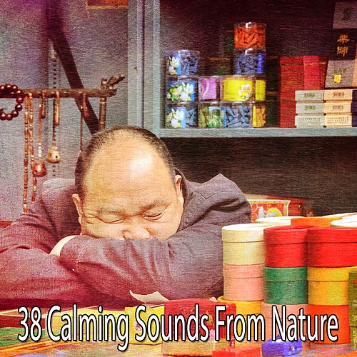 38 Calming Sounds From Nature by S.P.A