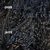 Jaiye by Ogee