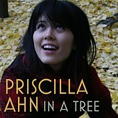 Play & Download In A Tree by Priscilla Ahn | Napster