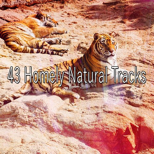 43 Homely Natural Tracks by Ocean Sounds Collection (1)