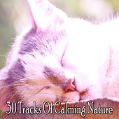 30 Tracks Of Calming Nature by Smart Baby Lullaby