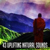 43 Uplifting Natural Sounds by Zen Music Garden