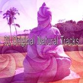 31 Original Natural Tracks by Classical Study Music (1)