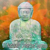 37 Naturally Detected Sounds by Nature Sounds Artists