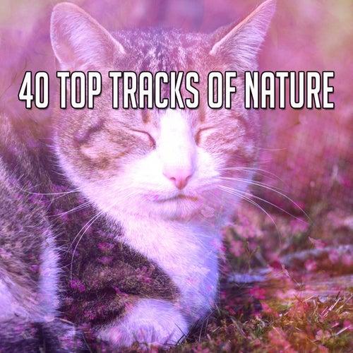 40 Top Tracks Of Nature de The Rest