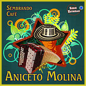 Play & Download Sembrando Cafe by Aniceto Molina | Napster