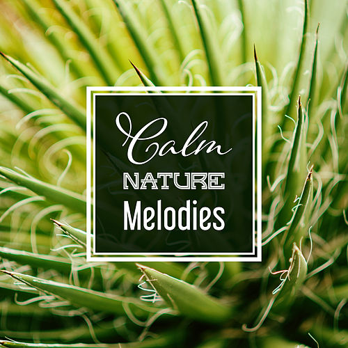 Calm Nature Melodies by Sounds Of Nature