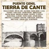 Puente Genil, Tierra De Cante by Various Artists
