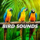 Bird Sounds by The Birdsongs